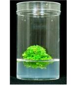 结冷胶(Gellan Gum)PhytoTech植物凝胶系列