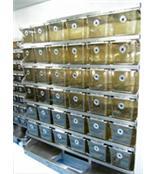 英國BIOZONE 獨立通氣籠具系統(IVC)