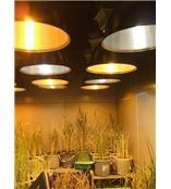 供應 植物生長室、Y系列氣候植物生長箱、大型植物生長箱廠家、植物生長箱、植物生長室北京