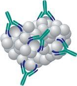 R&D有多种抗体可供选择,包括针对各种细胞因子、趋化因子、蛋白酶、生长因子、粘附因子、神经营养因子、干细胞因子和发育蛋白的抗体,