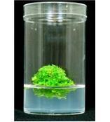 木本类植物基本培养基-不含维生素