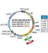 System Biosciences 慢病毒載體系統