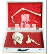 #人体骨杠杆分类模型*
