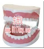 #牙保健模型*