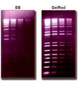GelRed and Gelgreen 核酸凝胶染料