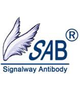 ERG Antibody现货 SAB抗体 SAB公司 新型总代理 上海萨博生物