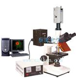 正置熒光顯微鏡DFM-30C