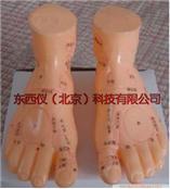 足部模型 wi89762
