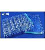 【WHB】厂家直销 WHB24孔细胞培养板 灭菌TC处理