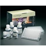 人鸟氨酸氨基甲酰转移酶(OCT)ELISA 试剂盒[Humanother ELISA Kit]