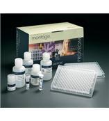 人多巴胺-β羟化酶(DBH)ELISA 试剂盒[Humanother ELISA Kit]