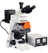 XSP-12CⅢ正置荧光显微镜