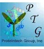 美国Proteintech抗体